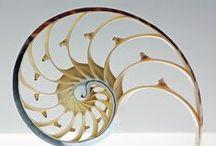 Sacred Geometry / Golden Ratio | Harmony