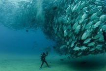 Scuba awe / Amazing colors, incredible scenes - the ocean at its best! / by Alexander Casassovici