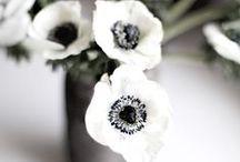 Pretty| flowers