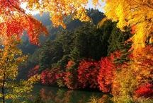 Loving Autumn / Can't get enough of the brilliant colors, the cool fresh aroma of leaves, and warm cozy feeling that Autumn brings.