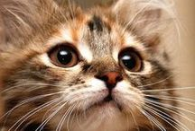 Kitty Cats / Kittens and Cats photo's