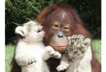Love Beyond Species
