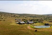Lifestyle - Game farms inspiration / Our properties in the wild / by The Pam Golding Property Group