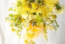 Flowers / by Yolanda Du Plessis