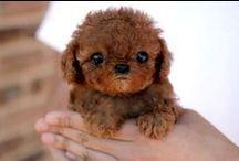 Mundo animal / Animal world / Fotos simpáticas y curiosas de animales, cachorros, mascotas... / Nice & cute animals pictures