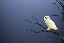 Birds / by gege momo