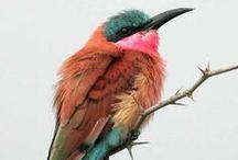 Birds / by Raissa Ferreira
