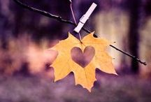 fall in love with autumn / wind, hot tea, sweaters and gold: hello autumn! for fall lovers