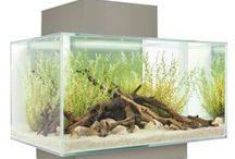 Fluval Aquariums / by MarilynM