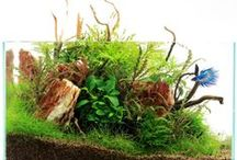 Aquascapes / Appreciation and Inspiration / by MarilynM