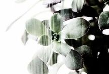 :: plants ::