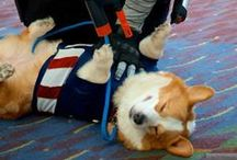 Geeky Pets    Dorky Dogs + Cosplaying Cats / Geeky pets! / by Lauren Goldberg