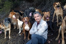Cesar Millan / Cesar Millan, (born César Millán Favela; August 27, 1969) is a Mexican-born American dog trainer. Widely known for his television series The Dog Whisperer with Cesar Millan