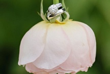 Wedding Bliss [photo ideas] / Photography ideas for the wedding :]  / by Kayla Bowers