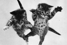 Kitties & Co.  / by Kayla Bowers