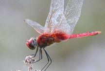Beautiful Bugs:-) / by Bluzcat