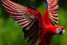 Beautiful Birds / by Catherine Adenle