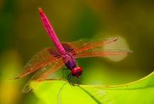 beautiful things with wings / by Pamela ORourke