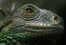 Reptilian / by Bluzcat