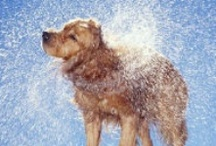 Dogs / Dog Blogs, dog stories, unusual dogs, mutts