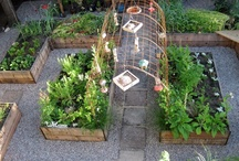 Gardens & Outdoors / by Amanda Freeman {Realistically Domestic}