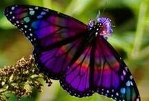 Animal -  Beautiful Wings