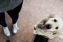 Dog training / Articles about training your dog.