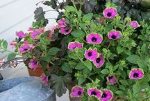 Container gardening / by Greenside Up