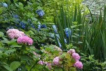 Gardens to visit / Some of Ireland's beautiful gardens worth visiting / by Greenside Up
