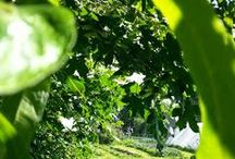 Greenside Up / Greenside Up Blog Posts and Interests / by Greenside Up