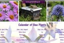 Birds, bees & wiggly things / Lots of ideas for encouraging (or not!) birds, bees and insects into the garden / by Greenside Up