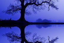 Tree Love / by Greenside Up