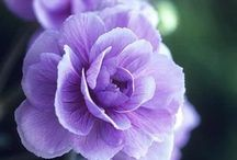 Passion for purple / by Greenside Up