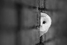 Owls  / by Amy Cribbins