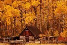 My Favorite Season. / I love autumn! / by Cassandra Perish
