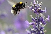 Flowers for Pollinators / Flowers suitable for bees and other pollinating insects / by Greenside Up