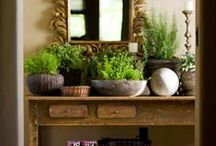 House plants, a touch of nature