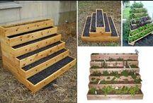 Food Growing / Making, growing, cropping and enjoying food