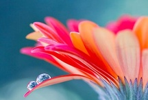 Flowers  / by Marianne Krivan