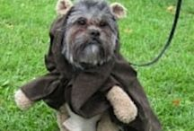 Animals in Costumes / Pets wearing costumes