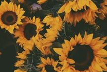 inspire: flowers / by Katie Lawrence