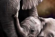 I love animals!