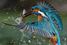Zázraky přírody - ptáci / Birds