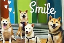 I love my Shiba's... / by Brittany Musgrove