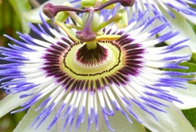 Flora / by Michelle Clark