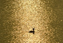 COLOUR ~ GOLDS & SILVERS / by Sharon Robbins