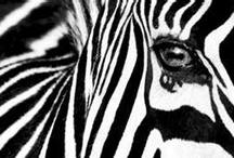 COLOUR ~ BLACKS & BLACKS & WHITES / by Sharon Robbins