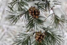 wintertime / by Katie