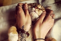I Love Every Kind of Cat / by Anne-Marie Gaumer