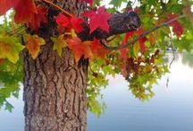 s e a s o n a l  //  autumn / the magic of color + falling leaves / by Saxon {Let's Drink Coffee, Darling}
